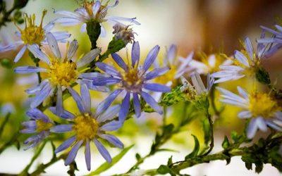 Je pense aux fleurs